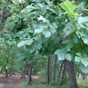 森のめぐみの保育環境セミナー2021☆オンラインセミナーのご案内☆
