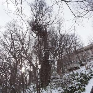真冬の電車事業所 5