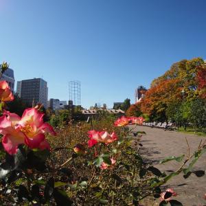秋深し 大通公園 3