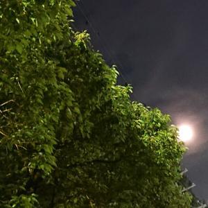 今夜も満月