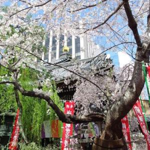 スケッチ・・・六角堂の桜