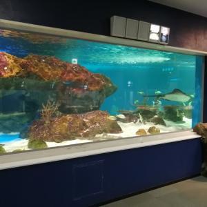 サンピアザ 穴場の水族館