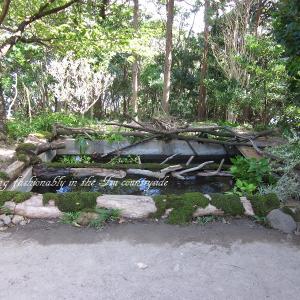 新プロジェクト『おばさん池を作る』第二章その8