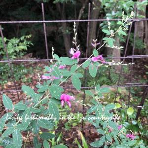来春の庭の妄想は・・・ おばさんに元気をくれる!?
