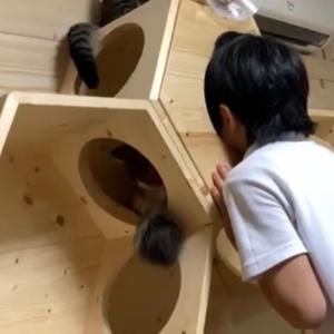 肉球を持つ猫も、虜になる息子も可愛いです