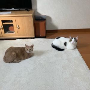 ひのきと豆大福、どちらが大きいのか?