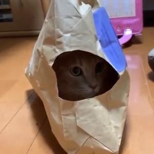 1個の袋でよく遊ぶ猫たちが可愛いです