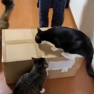 箱の中身を公開します