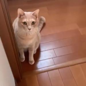 隣の部屋に呼びに来る猫