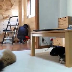 作業するお父さんの後ろでほのぼのする猫達です