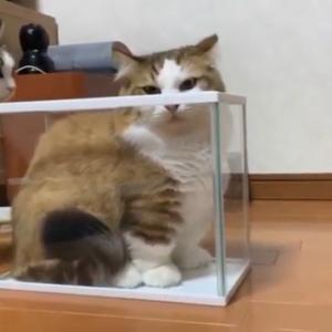 行列のできる水槽に並ぶ猫が可愛いです