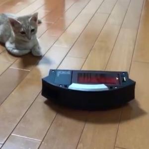 子猫ひのきの猫パンチが懐かしいです