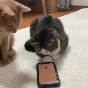 超アップで見ると豆大福に似てる猫