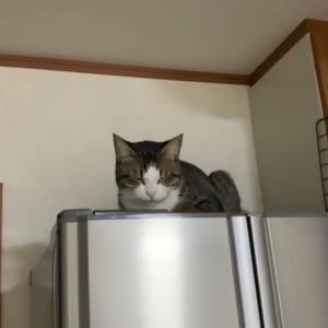 覗き込むとこっちを見てくる猫