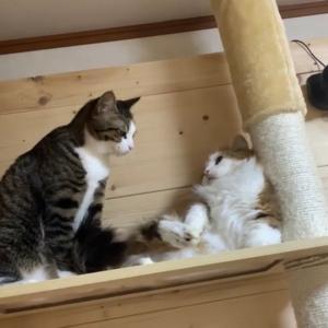 なんだかんだ仲の良い猫