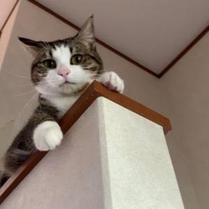 何かを訴えたいときの猫の鳴き声