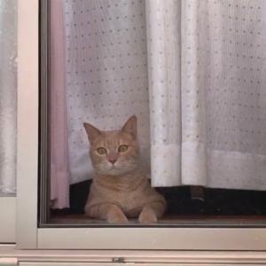 ベランダでのびのびする猫