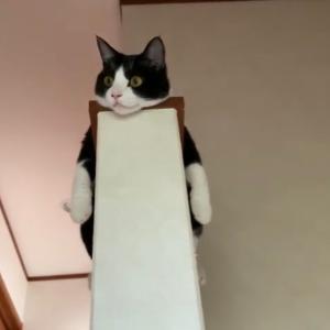 寛ぐスタイルにこだわりがある猫