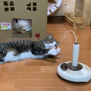 今までにない遊び方を発見する猫