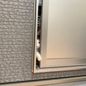ガレージで猫たちとたこ焼きパーティー 【予告編】