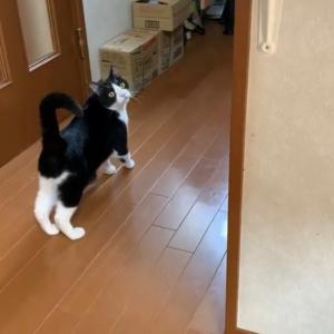 嬉しそうについて来てくれる猫