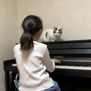 娘のピアノをしんみりと聴く猫