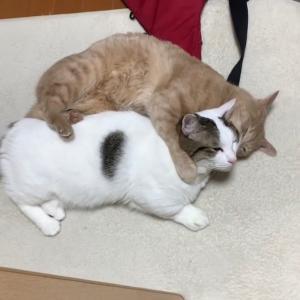 じつは仲の良い猫にほのぼのする