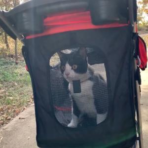 散歩でゴロゴロと楽しむ余裕の保護猫がかわいい