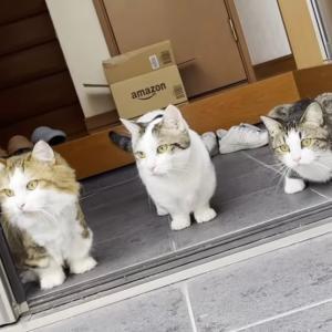 夜、猫が集まるという噂の娘のベッドにお母さんが寝てみたら…