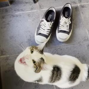 おやつよりも散歩に目覚めてしまった猫はこんな感じです