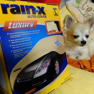 コストコ rainXボディーカバー…POLOにLサイズって!?