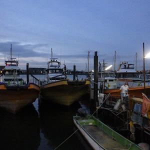 今日は湾フグ釣り大会!
