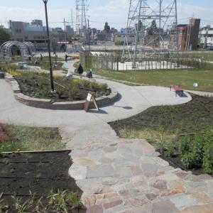 近所に造られた公園を散策