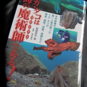 イカ・タコは海の魔術師である!