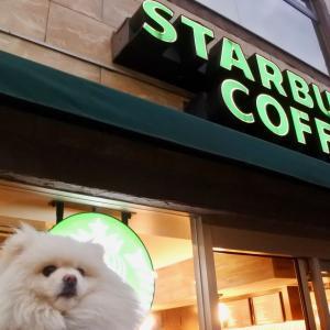 スターバックス・コーヒー 葉山海岸通り店