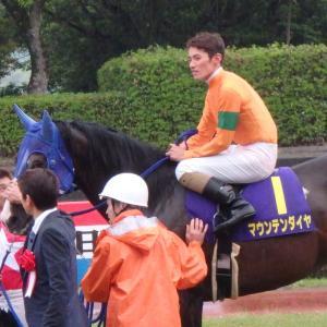マウンテンダイヤ引退~10歳牡馬~お疲れ様。馬は仕事として走る。