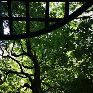 孫とロボロボ公園