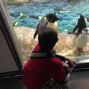 ペンギンくんとこぶたNo.4