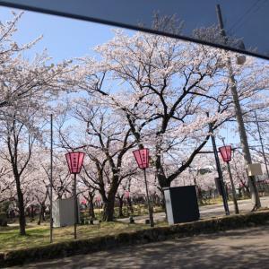 高田の観桜会
