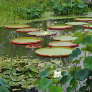 豪雨の合間にソウル植物園に。可愛い仕掛けがありました^^