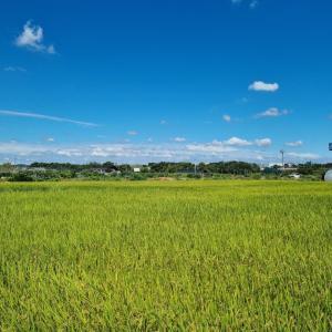 ソウルの西の端っこウロウロと畑とやっちゃった事