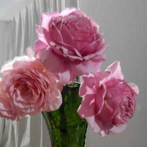 秋花を花瓶に挿してみた!