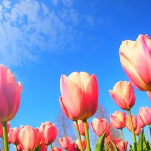コロナストレスを抱えている方へ、お花からの応援メッセージをお届けします