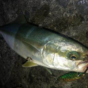 夜のショアスローは釣れるのか?魚種ごとの特性やジグ選びの要点などを解説!