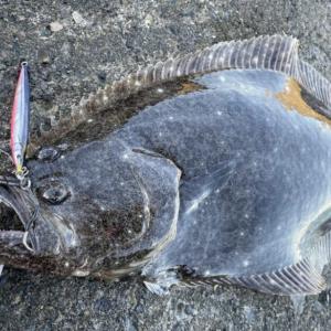 静岡サーフヒラメ釣行 秋シーズン開幕、良型もボチボチ接岸開始か?