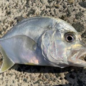メッキ釣りに使うおすすめワームはコレ!詳しい使い分けと合わせて徹底解説