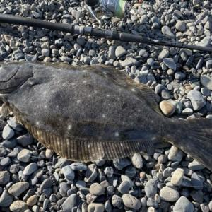 1月の静岡サーフヒラメ釣行 魚が溜まるスポットを見つけて連発!