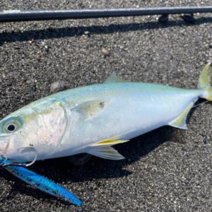 富士サーフスーパーライトショアジギング釣行 ワカシ爆釣モード
