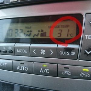 今年初の30℃超え~Σ(-∀-;)