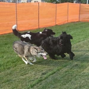 楽しかったオオカミ狩り♪